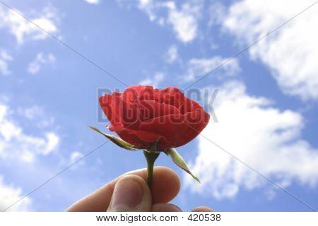 Rose Sky