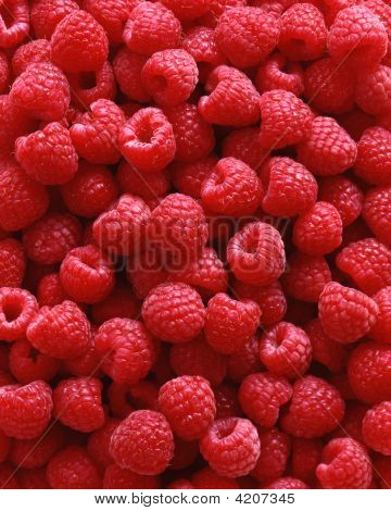 Background Of Red Raspberries