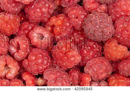 raspberries, background