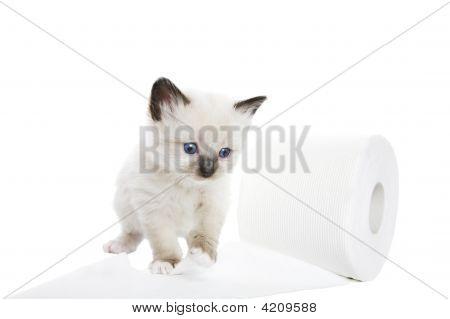 Kitten Soft
