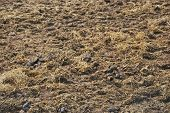 stock photo of excrement  - Manure spreaded on the ground - JPG