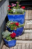 Blue glazed terracotta plant pots filled with annual flowers used as home decoration.