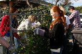 LOS ANGELES - FEB 9:  Theresa Castilo, Emily Wilson, Jason Thompson removing old vines from fence at