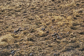 pic of excrement  - Manure spreaded on the ground - JPG