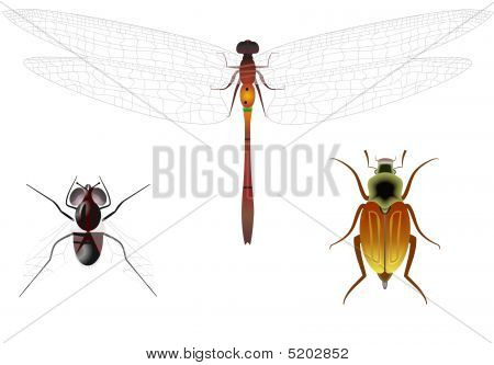 Representatives Of Insects