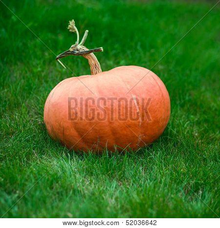 Orange Pumpkin On Grass