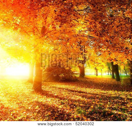 Autumn. Fall. Autumnal Park. Autumn Trees and Leaves in Sunlight Rays