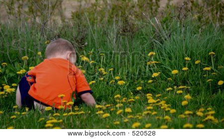 Baby In Dandelion Field