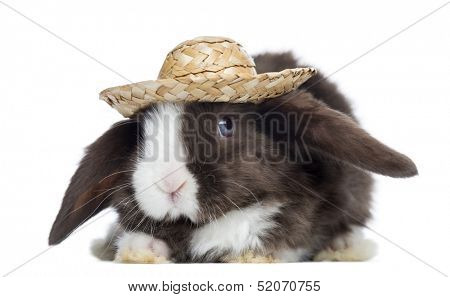Satin Mini Lop rabbit facing with a straw hat, isolated on white