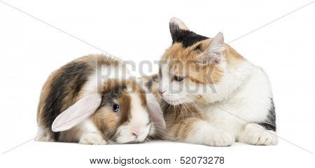 European shorthair and lop rabbit, isolated on white