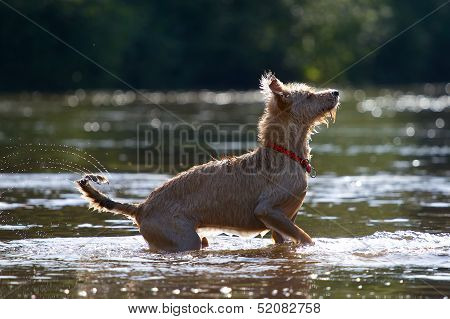 Wagging Its Tail In The Water