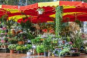 Monaco , the flower market under the open sky
