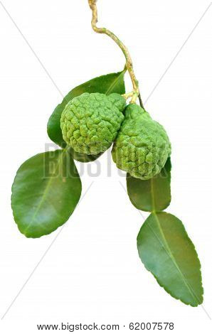 leech lime fruits
