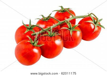 Tomato Panicle
