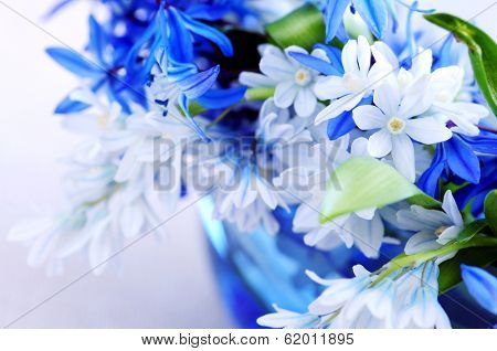 Blue bouquet of first spring flowers closeup
