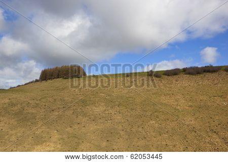 Spring Hillsides