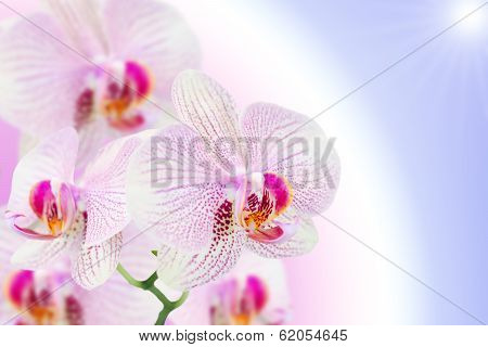 Spotted Orchid Flower On Natural Gradient