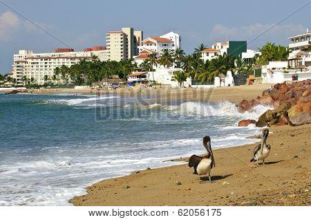 Pelicans on Puerto Vallarta beach in Mexico
