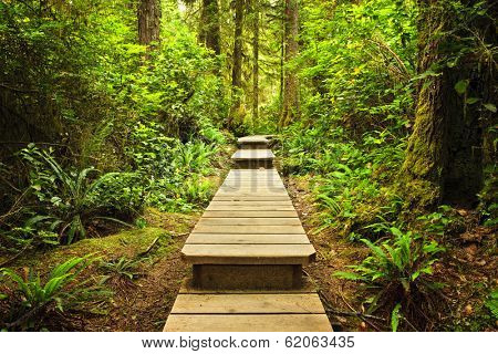 Wooden path through temperate rain forest. Pacific Rim National Park, British Columbia Canada