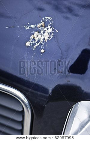 Closeup of bird droppings on car hood