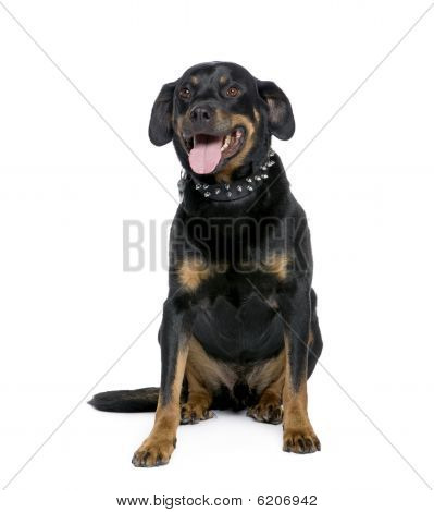 Rottweiler, 6 Years Old, Sitting In Front Of White Background