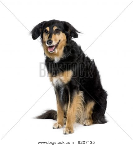 Bastard Dog, 8 Years Old, Sitting In Front Of White Background