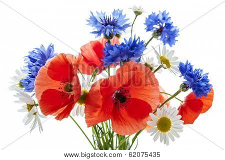 Bouquet of wildflowers - poppies, daisies, cornflowers - on white background, studio shot.