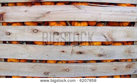 Orange Pumpkins in a wooden crate