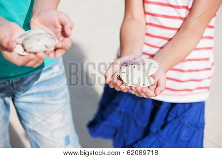 Close up of kids hands holding sand dollars