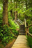 stock photo of pacific rim  - Path through temperate rain forest - JPG