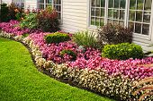 stock photo of horticulture  - Flowerbed of colorful flowers against wall with windows - JPG