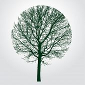 foto of tree trim  - round trimmed tree - JPG