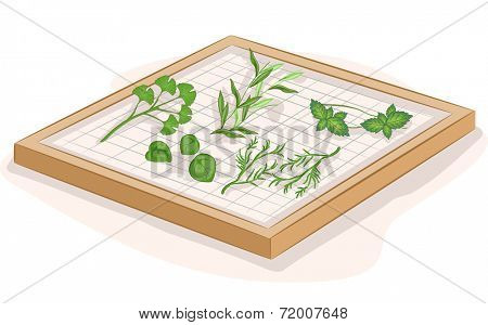 Illustration Featuring Herbs Being Dried