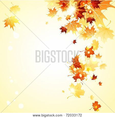 Bright background with maple autumn leaves. Place for text