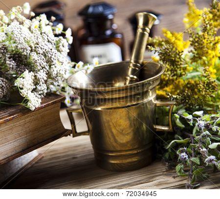Assorted natural medical herbs and mortar