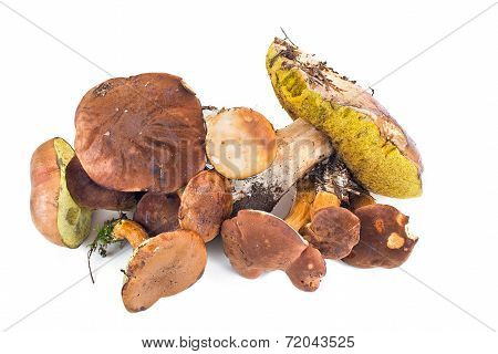 Small Group Of Forest Mushrooms