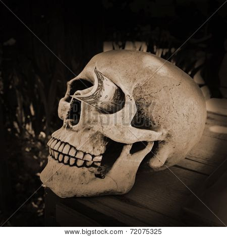 Skull with a dollar stuck in his eye socket