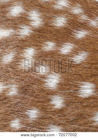 Spotted fur of a sika deer