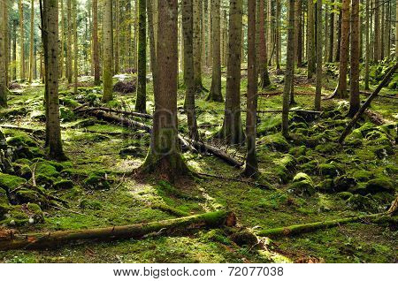 Fir Forest Reserve
