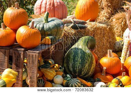 Selling Pumpkins Along The Road