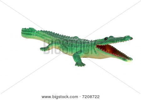 Crocodile Alligator