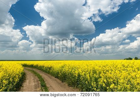 Ground road in rapeseed yellow flower field