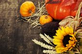 picture of corn  - Autumn composition  - JPG
