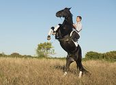 pic of stallion  - young man riding a black stallion in the nature