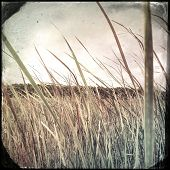 pic of marsh grass  - Instagram filtered image of tall grass in a swamp marsh - JPG