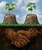 stock photo of environmental conservation  - Helping one another as a mutual benefit business support group concept as two chopped trees with new growth of hope emerging as teamwork with the roots shaped as a handshake providing the strength for success - JPG