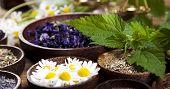 image of century plant  - Alternative medicine - JPG