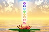picture of kundalini  - Illustration of the seven main chakras mandalas - JPG