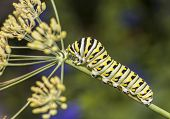 pic of flying-insect  - butterfly is a mainly day - JPG