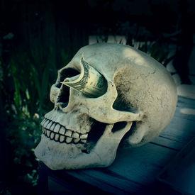 image of eye-sockets  - Skull with a dollar stuck in his eye socket - JPG